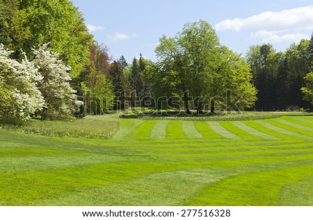 Blooming, green spring park with big trees. - stock photo