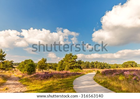 Blooming heathland with hiking and bicycle trail in national park The Veluwe in The Netherlands - stock photo