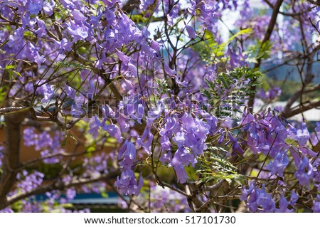 stock images, royaltyfree images  vectors  shutterstock, Beautiful flower