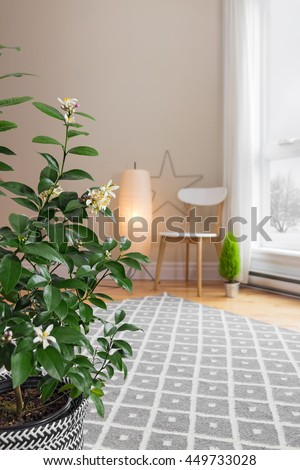 Blooming lemon tree in a spacious living room with modern decor.
