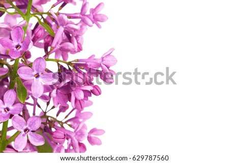 Blooming lilac background with copy space