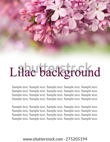 Blooming lilac background with place for text - stock photo