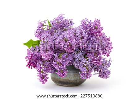 Blooming lilac flowers. Macro photo. - stock photo