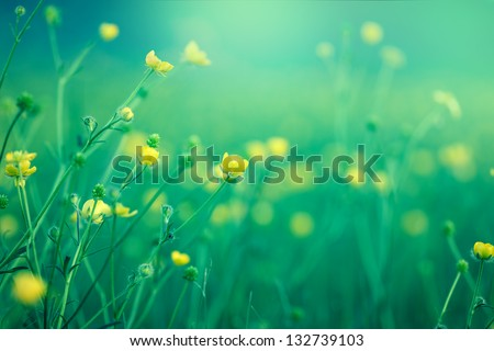 Blooming little yellow flower in spring