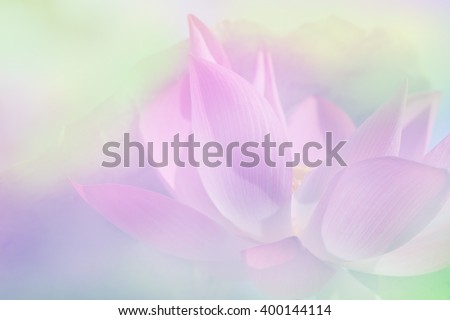 blooming lotus soft blur background in vintage pastel tones