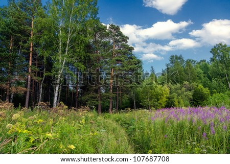 Blooming meadow - stock photo