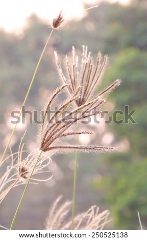 blooming meadow grass in sunset - stock photo