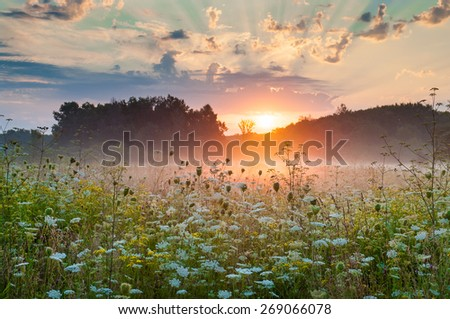Blooming meadow grass in the mist at dawn - stock photo