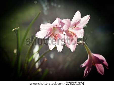 Blooming pink flowers - stock photo