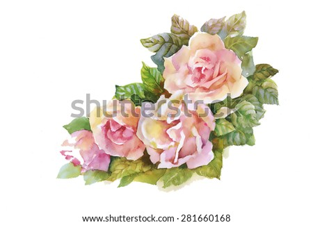 Blooming Pink Rose flowers, watercolor illustration