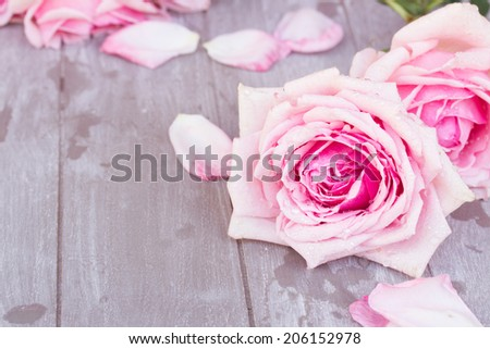 blooming pink  roses  laying  on wooden  table