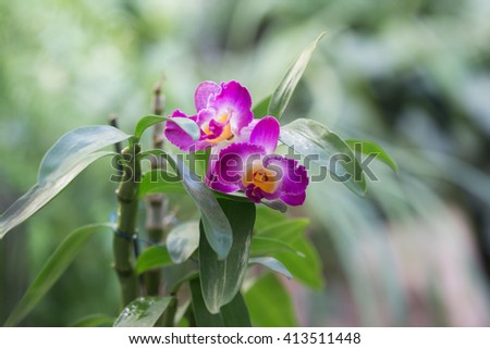 blooming purple orchid close up in the foreground - stock photo