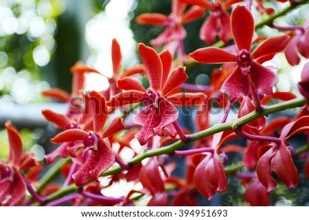 blooming red orchid in garden