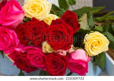 blooming red, yellow  and pink roses  laying  on wooden  table close up