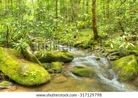 Blooming Rhododendron and water cascades with boulders covered in green moss. Smoky Mountains National Park. - stock photo