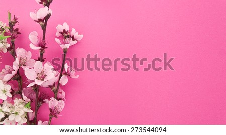 Blooming sakura, spring flowers on pink background with space for greeting message. Mother's Day and spring background concept. - stock photo