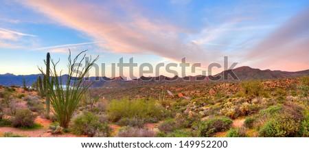 Blooming Sonoran Desert at sunrise. - stock photo