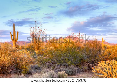 Blooming Sonoran Desert, catching day's last rays. - stock photo