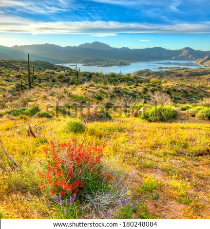 Blooming Sonoran Desert, with red Chupparosa. - stock photo