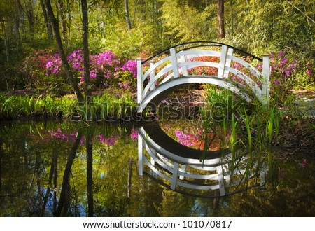 Blooming Spring Azalea Flowers Garden Nature Pond South Charleston SC peaceful flower reflections