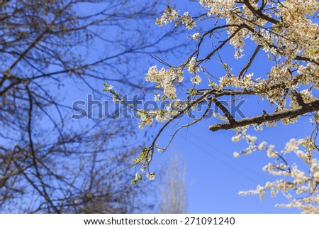 Blooming spring buds on a tree - stock photo