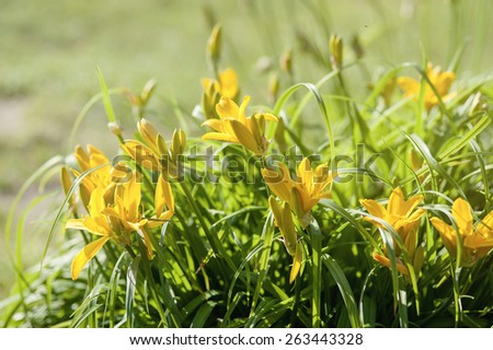 Blooming spring meadow yellow flowers - stock photo
