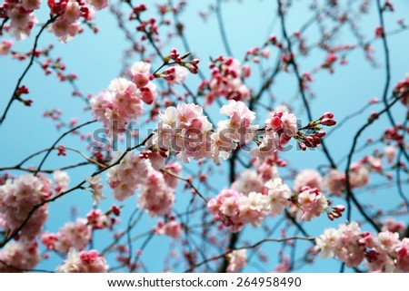 Blooming spring tree branch background - stock photo
