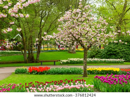 Blooming spring tree with tulips  in holland park Keukenhof, Netherlands - stock photo