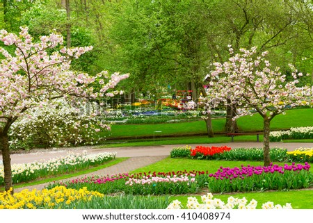 Blooming spring trees with tulips and daffodils  in holland park Keukenhof, Netherlands - stock photo
