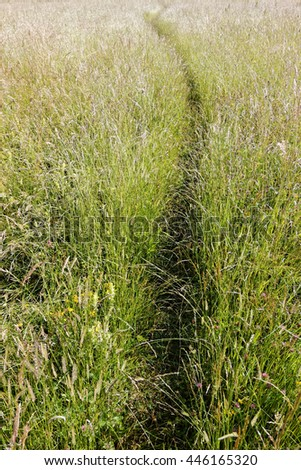 Blooming summer meadow, small trail through high grass - stock photo