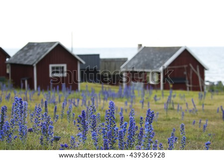 Blooming summer wildflower Blueweed, Echium vulgare on the island of Gotland in Sweden - stock photo