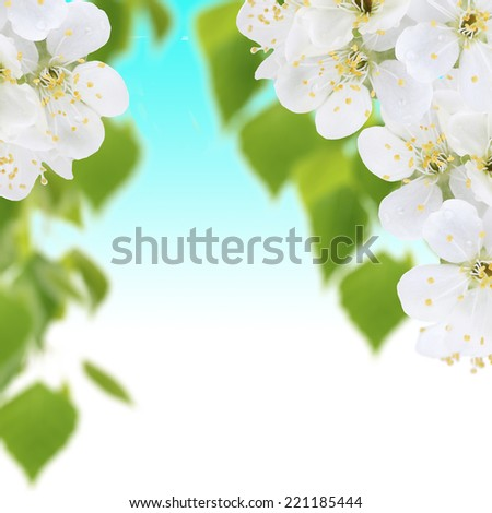 Blooming tree branch with white flowers - stock photo