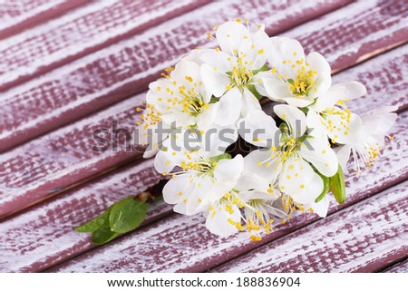 Blooming tree branch with white flowers on wooden background