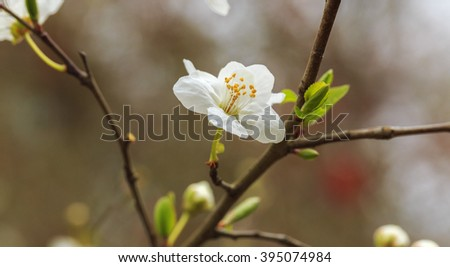 Blooming tree buds in the forest - stock photo