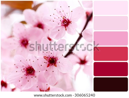 Blooming tree twigs with pink flowers and palette of colors - stock photo