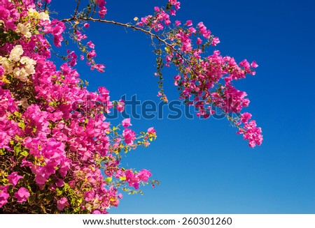 Blooming tree with red flowers on blue sky background. - stock photo