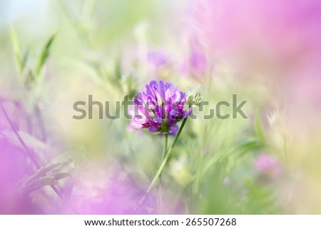 Blooming wild flowers during sunrise - stock photo