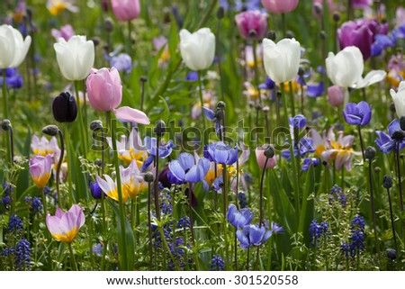 blooming wild flowers on the meadow at spring time - stock photo
