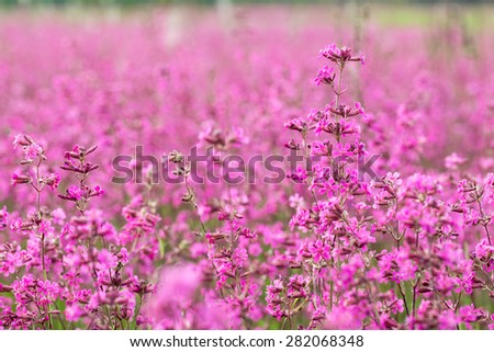 Blooming wildflowers. - stock photo