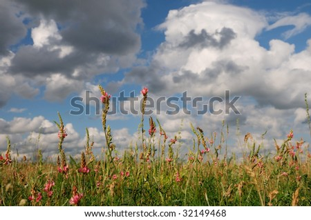 Blooming wildflowers against blue cloudy sky
