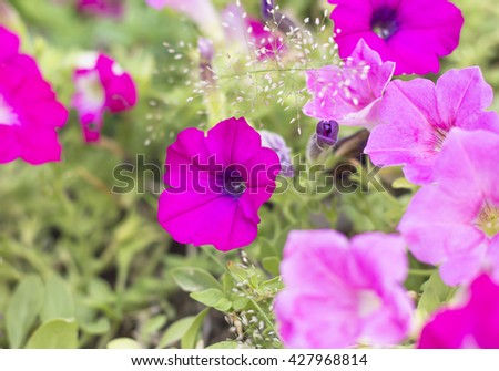 Blooming yellow flowers in spring. selective focus - stock photo
