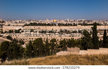 blooming yellow mustard biblical bush on the Mount of Olives overlooking Jerusalem, Israel - stock photo