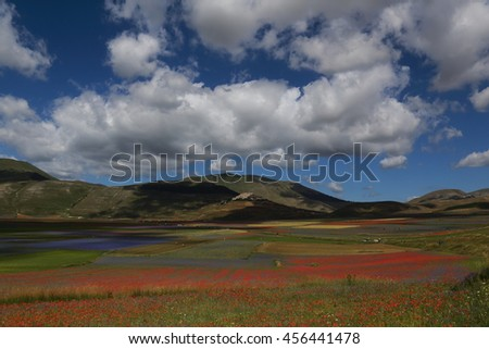 blooms of papaver and cornflowers in the fields of lentils from Castelluccio Mountains National Park Sibillini Umbria Italy - stock photo
