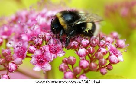 Blossom - stock photo
