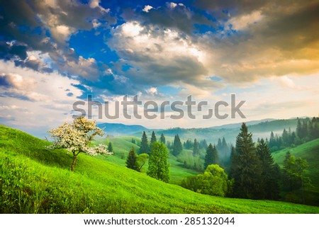 Blossom apple tree on a green hill in a Carpathian mountains. Bright majestic sunrise with dramatic low stormy clouds - stock photo