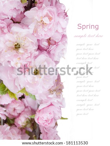 Blossom flowers tree background isolated on white with sample text