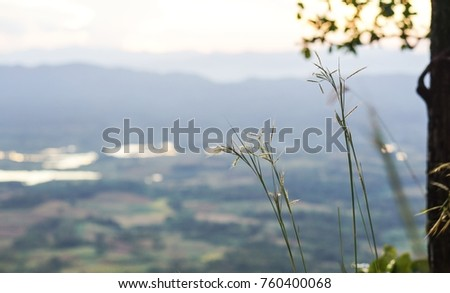 Blossom grass on the mountain blurred.