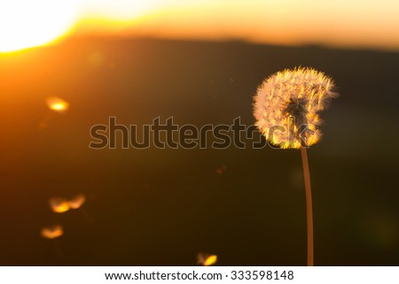 blossom in backlight - stock photo
