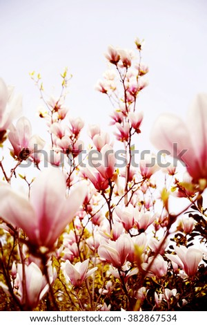blossom of  tree with flowers floral - stock photo