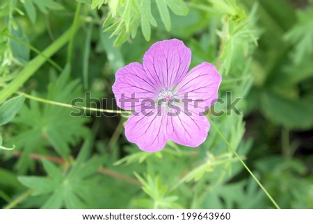 Blossom pink flower on the field, shallow depth of image definition